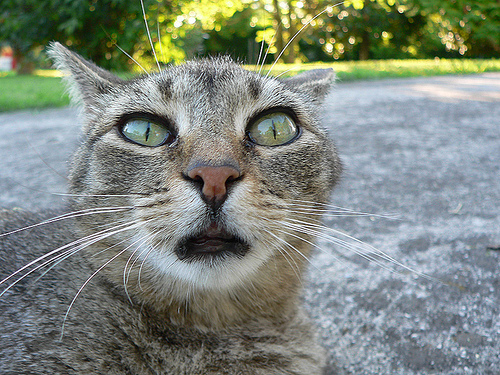 iPhoneの便利機能を知らなかった猫の表情